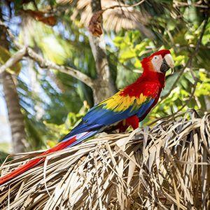turismo responsable caribe