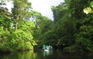 Tortuguero-Animal-Limit