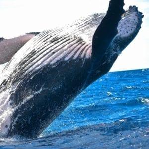 avistamiento ballenas panama