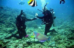 deportes de viajes de aventura blog animal limit agencia viajes